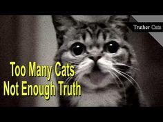 Are Internet Cats Brainwashing You? - YouTube