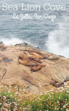 Seal and sea lion cove at La Jolla beach in San Diego