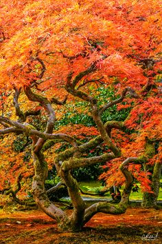 The Seattle Japanese Garden: Medusa (Japanese Garden, Seattle, Washington) By Aaron