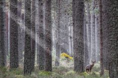 A Trip to Balblair Wood and Loch Fleet