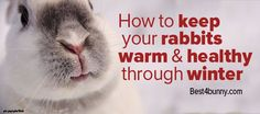 Are you prepared for the cold weather? Find out how to keep your bunnies warm this winter here... http://best4bunny.com/keep-rabbit-warm-healthy-winter/