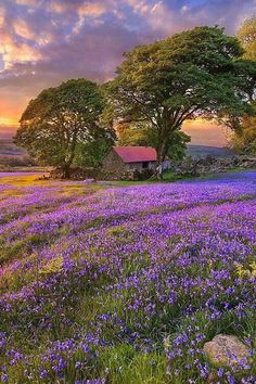 Bluebell season, in sunset, set in acres of English countryside. Beautiful World, Beautiful Images, Simply Beautiful, Beautiful Flowers, Landscape Photography, Nature Photography, Amazing Nature, Belle Photo, Beautiful Landscapes