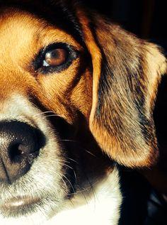 Beagle love - Remington Photo by Cody age 9