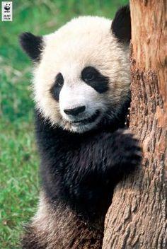 Я сделал доброе дело и помог дикой природе вместе с WWF!