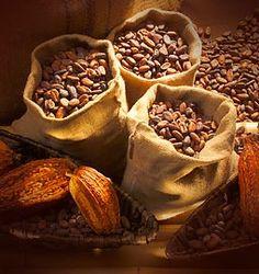 Le Cacao une fois bien séché est mis dans des sacs en jute et acheminé vers les Usines en Ville .