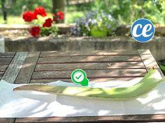 Voici Comment Couper Et Utiliser Le Gel D'une Feuille d'Aloe Vera. Feuille Aloe Vera, Gel Aloe, Danger, Attention, Garden, Plants, Planting Seeds, Homemade Beauty Products, Natural Remedies