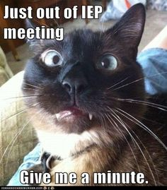 Just out of IEP meeting Give me a minute. - LOLcats is the best place to find and submit funny cat memes and other silly cat materials to share with the world. We find the funny cats that make you LOL so that you don't have to. Funny Cat Videos, Funny Cats, Teaching Memes, Student Teaching, Teaching Ideas, Classroom Humor, Classroom Ideas, Iep Meetings, Teacher Problems