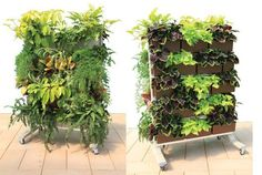 LiveScreen Makes Vertical Gardening Flexible and Easy! If you're impressed by some of the massive vertical gardens popping up all over the world, and want one of your own, in miniature, check out LiveWall. The company's three products are all planted wall systems that resemble bookshelves overflowing with greenery.