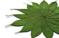Alice Fox Leaf Stitching: Eucalyptus Circle (2015) .