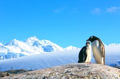 Mommy and baby penguin - Antarctica