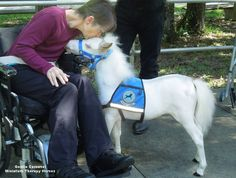 Therapy Horses of Gentle Carousel Home