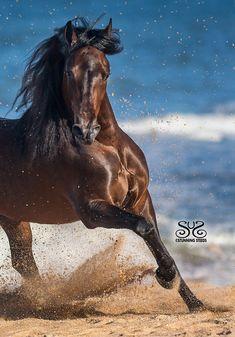 Cute Horses, Pretty Horses, Horse Love, Andalusian Horse, Friesian Horse, Arabian Horses, Black Horses, Wild Horses, Equine Photography