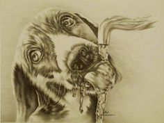 """""""Dog Drinking"""" 11″ x 14″ Graphite Pencil on Paper $150 Order Now: artistrybylisamarie@hotmail.com Art comes matted with certificate of authenticity"""