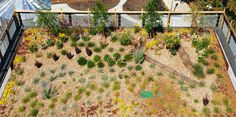 Pacific Northwest urban green roof with logs. Good for the environment! Landscape Elements, Green Landscape, Landscape Architecture, Sustainable Development, Logs, Pacific Northwest, Sustainability, Vineyard, Environment
