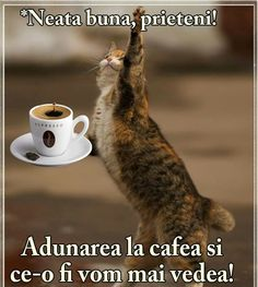 Morning Coffee, Good Morning, Motivational Words, Brown Bear, Humor, Funny, Animals, Romania, Wallpapers