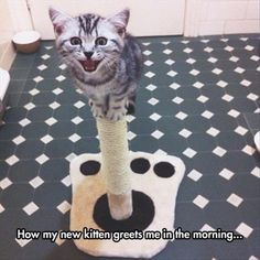 Good Morning Princess!