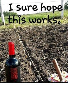 Weekend gardening project wine humor wineglasswriter meme is part of Wine jokes - Wine Jokes, Wine Meme, Wine Funnies, Wine Signs, Coffee Wine, Drinking Quotes, Wine Wednesday, In Vino Veritas, Flyer