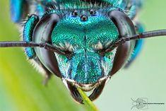Insects – 27 photos macro fascinantes de Colin Hutton