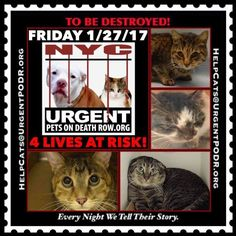 Today's Dead Cats Walking, Jan, 27 2017. Let's STOP THE KILLING of innocent animals! Please, visit the following pages: https://m.facebook.com/nycurgentcats  https://m.facebook.com/UrgentPetsOnDeathRow  https://m.facebook.com/Must-Love-Cats-Safe-with-Me-1606936636223812/  https://m.facebook.com/mldsavingnycdogs/   ~ Their lives matter! STOP THE KILLING MACHINE! ~ WE LOST 1 (ONE) INNOCENT SOUL ON Dec, 25 AND 1 (ONE) ON Dec, 29! TODAY, THERE ARE 4 (FOUR) LIVES AT RISK!