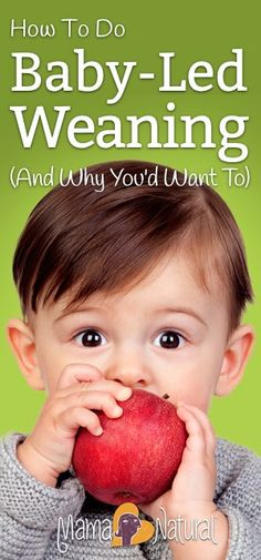 Baby-led weaning all
