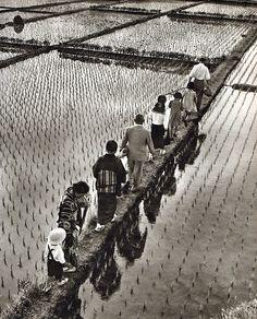 endilletante:        R GUILLAIN, F MEILLEAU, P LANDY  LE JAPON QUE J'AIME…  EDITIONS SUN PARIS. 1967. In-4 Carré