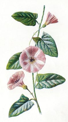 Hulme botanical Sandie Goble's Printable Heaven Blog