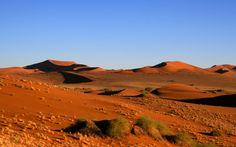 Vegetation on Dunes - (Namibia, 2007) - Copyright Arnaud Vaschalde