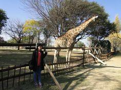 Lion Park, South Africa :)