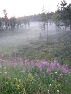 Fog in Enontekio....