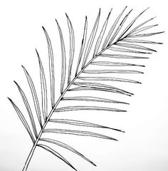 Flower Drawing Discover How to draw a Date Palm Tree Palm Leaf- God doesnt take you out of the desert but he gives you strength and protection in it palms and 12 springs) Leaves Sketch, Deco Jungle, Watch Drawing, Leaf Outline, Palm Tattoos, Leaf Drawing, Art Drawings, Illustration Art, Canvas Art