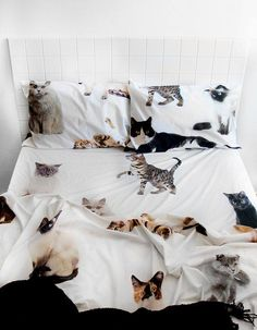 Love these sheets!