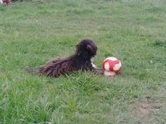 cansado de jugar a la pelota