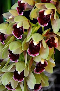 Orchids-----I really like orchids But mine grow and bloom for 2 or 3 years then…