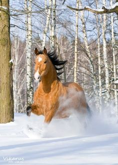 Country Living ~ A horse loves freedom, and the weariest old work horse will roll on the ground or break into a lumbering gallop when he is turned loose into the open.