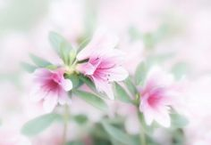 Pretty And Cute, Pretty Little, Texture Photography, Vintage Soft, Beautiful Soul, Beautiful Things, Secret Places, Daydream, In This Moment