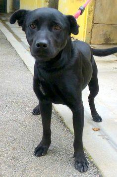 Nos chiens à adopter: lamie - parce qu'on en a tous besoin d'une ;)
