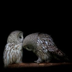 Owls - a bit like the Lladro, mum was very fussy about owls faces, took me ages to choose this picture to use!