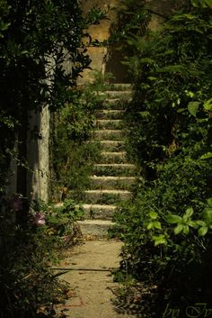 Steps to the back upper garden, follow me.