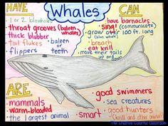 Whale Anchor Chart!