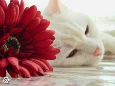 if you are so sleepy! #beautiful #cats #cat #purr