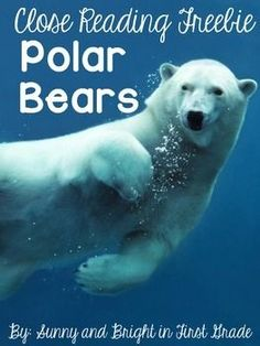"""FREE! This close reading freebie is designed to teach your young students about polar bears through either close reading or shared reading experiences. This product includes an informational text that answers the essential question: """"Are polar bears good swimmers?"""" Simple text dependent questions, writing prompts, graphic organizers, and detailed instructions for use are also included."""