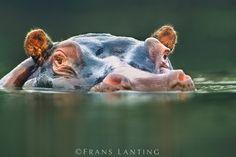 022499 | Frans Lanting Stock