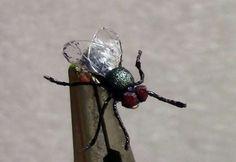 realistic housefly