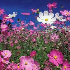 Resultado de imagen de flores