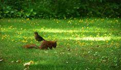 Eichhörnchen und Amsel - Jahreszeiten - Galerie - Community