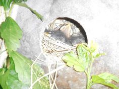 Baby bluebirds in the gourd. Many types of birds love our park yard, as much as we do <3
