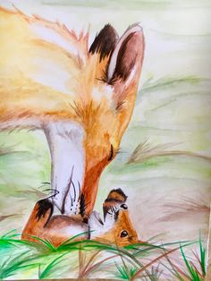 Foxes - Watercolor