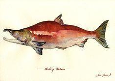 Sockeye salmon blueback salmon red salmon alaska fish fly fishing cm art original Watercolor painting by Juan bosco Alaska Tattoo, Fish Chart, Fish Artwork, Sockeye Salmon, Fish Drawings, Canadian Art, Fish Print, Native Art, Wildlife Art