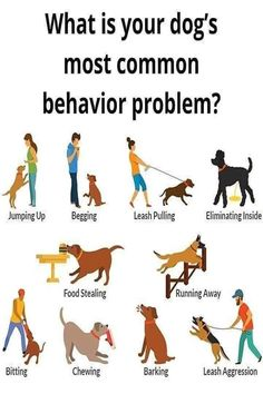 Dog Training Courses, Puppy Training Tips, Best Dog Training, Brain Training, Agility Training, Dog Agility, Potty Training, Leash Aggression, Dog Training Techniques
