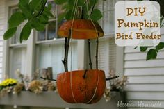DIY Pumpkin Bird Feeder :: Use up that leftover Pumpkin and feed the birds: Directions on HoosierHomemade.com